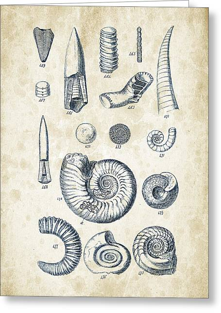 Invertebrate Greeting Cards - Mollusks - 1842 - 22 Greeting Card by Aged Pixel