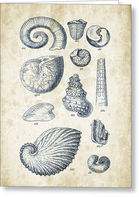 Invertebrate Greeting Cards - Mollusks - 1842 - 23 Greeting Card by Aged Pixel