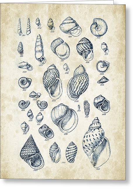 Invertebrates Digital Art Greeting Cards - Mollusks - 1842 - 25 Greeting Card by Aged Pixel
