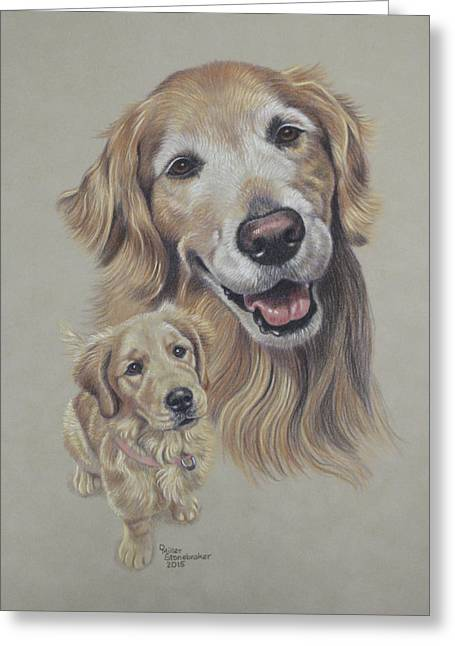 Golden Puppy Greeting Cards - Molly Before and After Greeting Card by Debbie Stonebraker