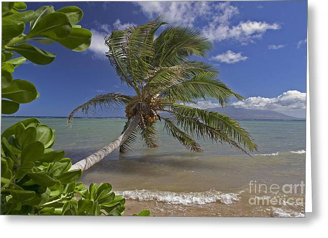 Overhang Greeting Cards - Molokai, Palm Tree Greeting Card by Dave Fleetham - Printscapes