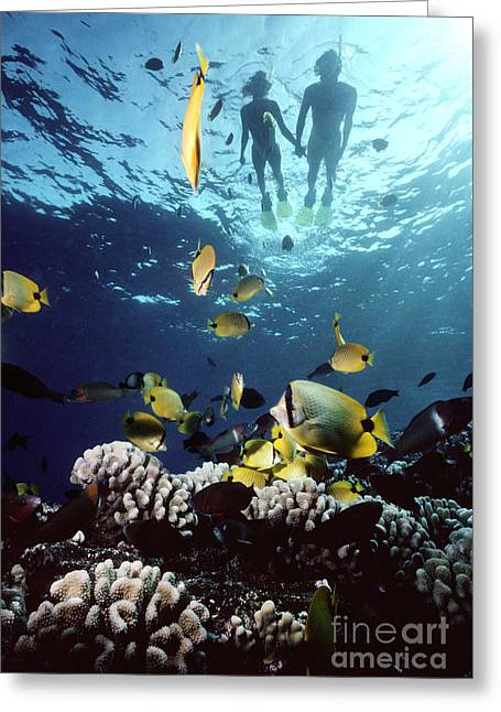 Snorkel Greeting Cards - Molokini Snorkeling couple Greeting Card by Ed Robinson - Printscapes