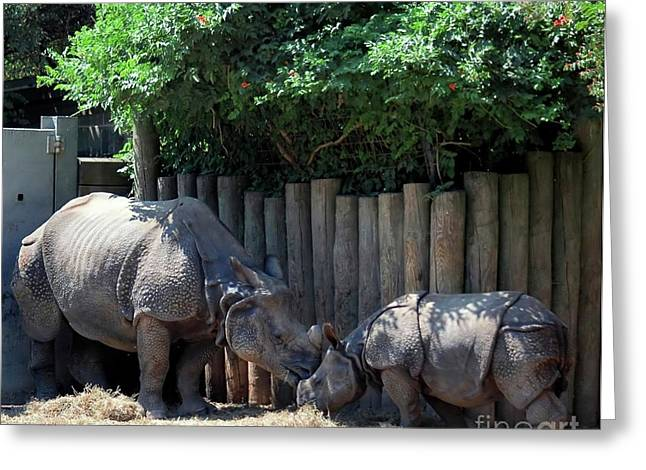Rhinoceros Greeting Cards - Mom Kissing Baby Greeting Card by Kathleen Struckle