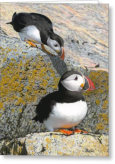 Atlantic Puffin Greeting Cards - Mom Watch ME Greeting Card by Brent Ander