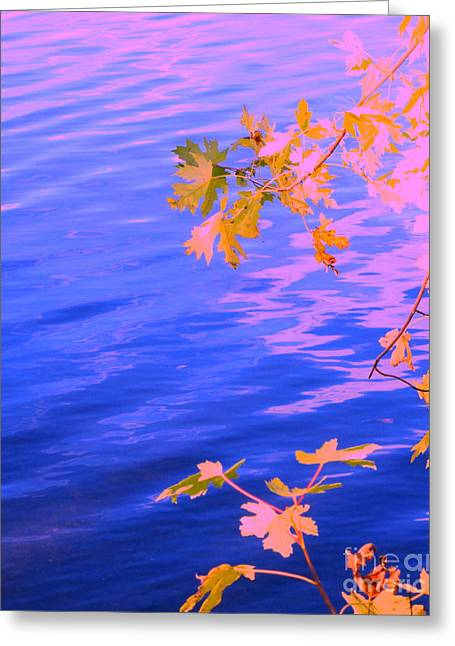 Moment Of Quiet Greeting Card by Sybil Staples