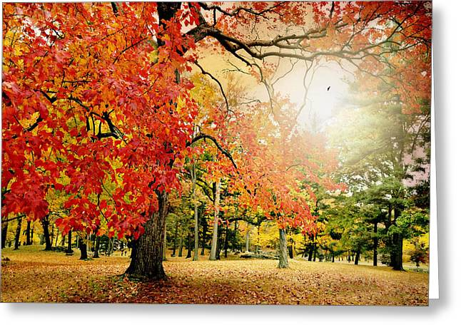 Precious Moment Greeting Cards - Momento Prezioso Greeting Card by Diana Angstadt