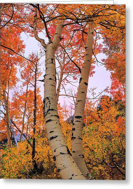 Moments Of Fall Greeting Card by Chad Dutson