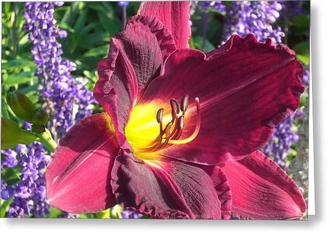 Day Lilly Greeting Cards - Moms Lilly Greeting Card by Wendy Robertson