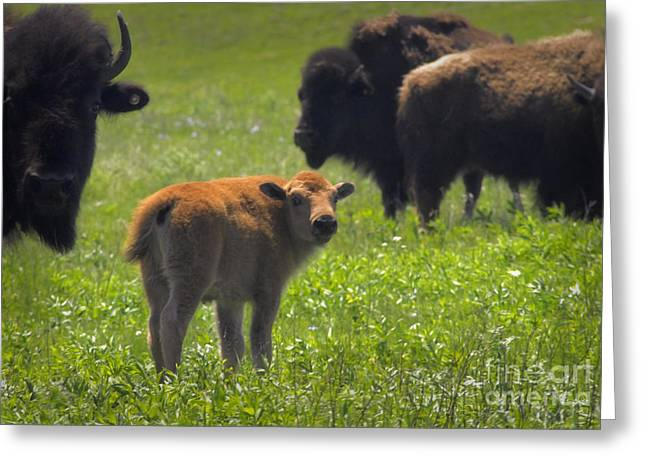 Oklahoma Landscape Greeting Cards - Moms Not Happy Greeting Card by Fred Lassmann