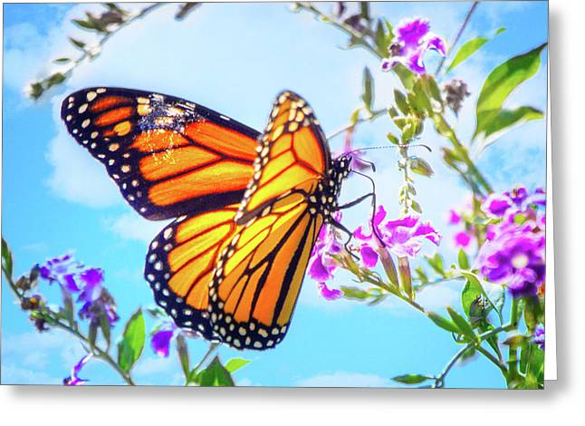 Monarch Butterfly And Blue Skies Greeting Card by Mark Andrew Thomas