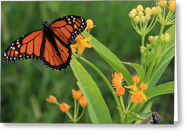 Stein Greeting Cards - Monarch Butterfly and friend Greeting Card by Valerie Stein