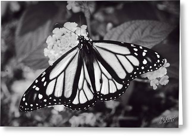 Flying Animal Greeting Cards - Monarch Butterfly - Monochrome Greeting Card by F Leblanc