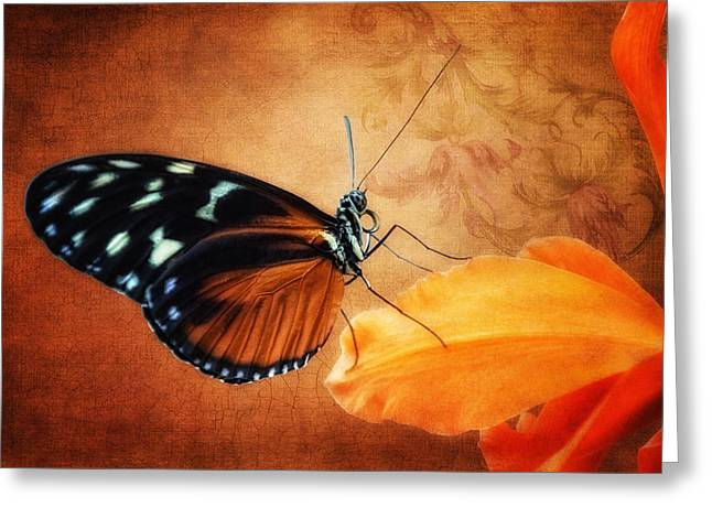 Colorful Orchid Greeting Cards - Monarch Butterfly on an Orchid Petal Greeting Card by Tom Mc Nemar