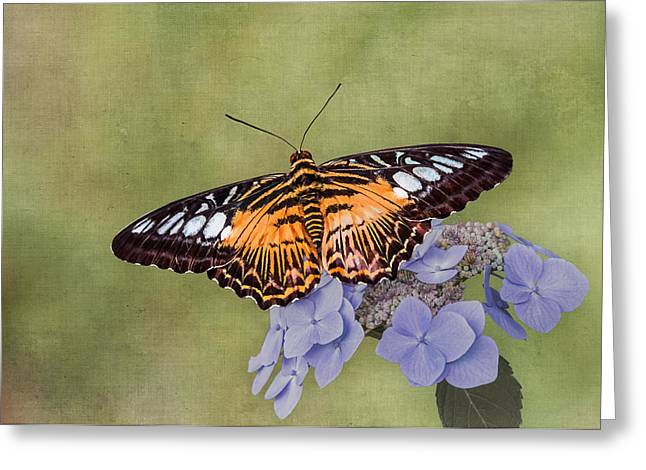 Science Greeting Cards - Monarch Butterfly Greeting Card by Patti Deters