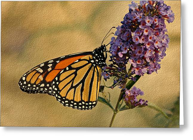 Butterfly On Flower Greeting Cards - Monarch Butterfly Greeting Card by Sandy Keeton