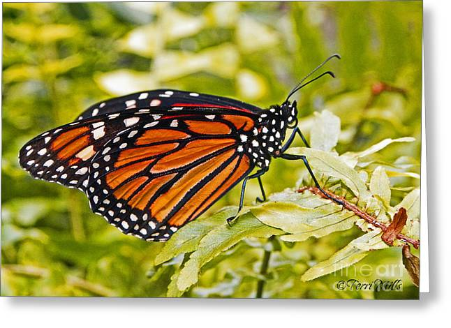 Dot Pyrography Greeting Cards - Monarch Butterfly Greeting Card by Terri Mills