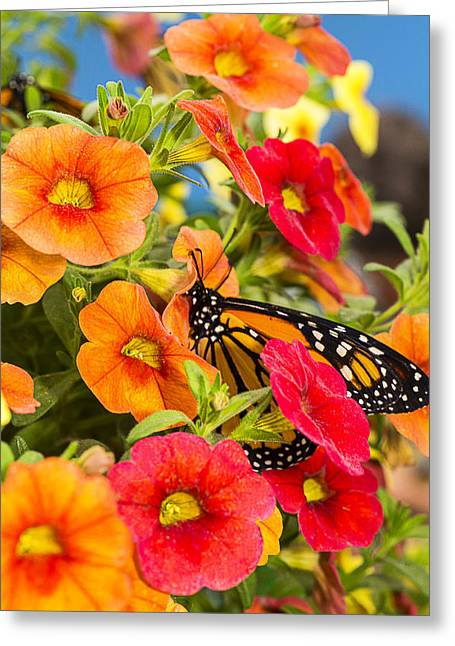 Monarchs Greeting Cards - Monarch In The Flowers Greeting Card by Garry Gay