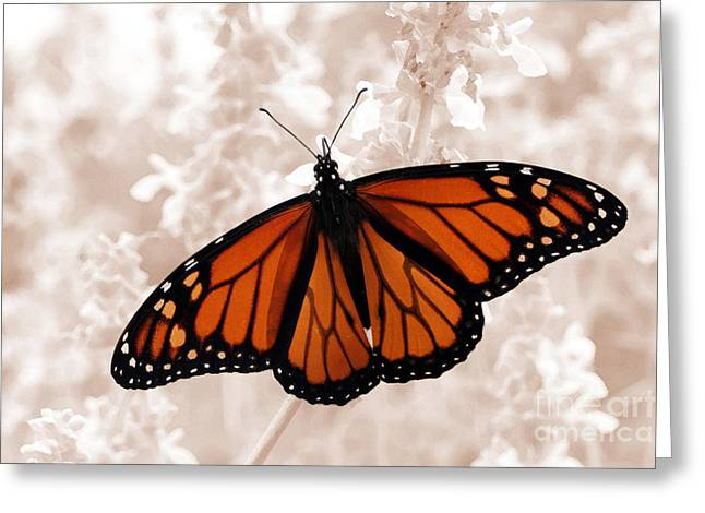 Jeannie Burleson Greeting Cards - Monarch Greeting Card by Jeannie Burleson