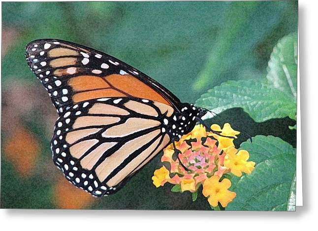 Nature Greeting Cards - Monarch Greeting Card by Lisa S Baker