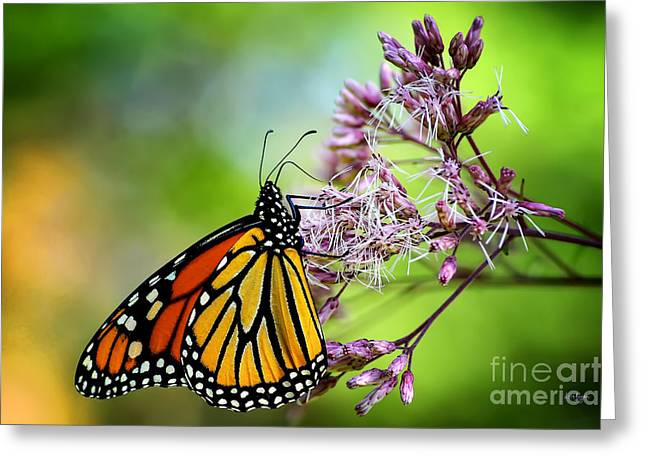 Nymphalidae Greeting Cards - Monarch Greeting Card by Lois Bryan