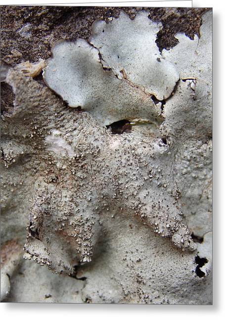 White Photographs Greeting Cards - Mongrel - Volcanic Rock Lichen Greeting Card by Elena Schaelike