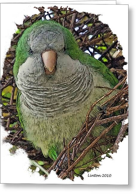 Monk Parakeet Greeting Card by Larry Linton