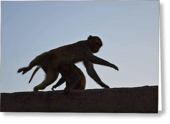 Govinda Greeting Cards - Monkey Buisness Greeting Card by Kamala Sharma