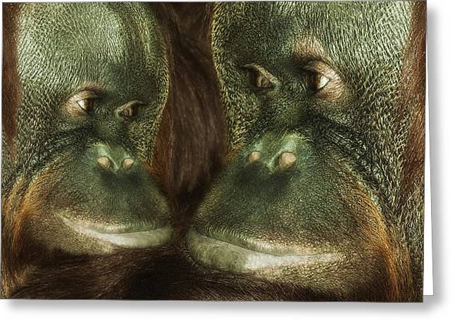 Orangutans Greeting Cards - Monkey Love Greeting Card by Jack Zulli
