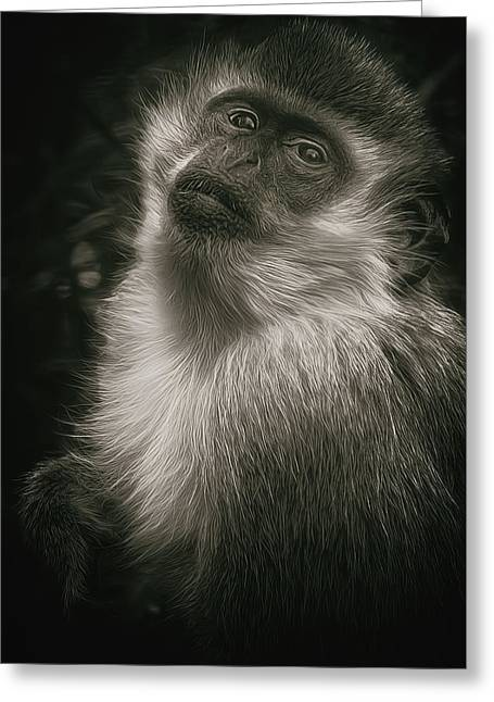 Monkey Portrait Greeting Card by Laura Macky
