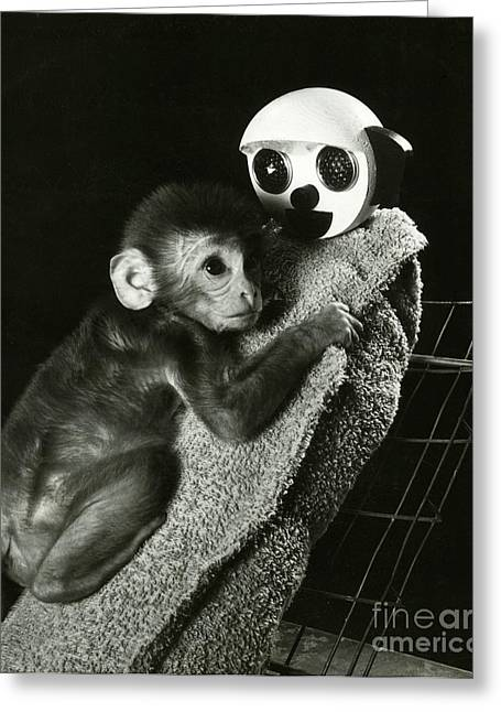 Monkey Research Greeting Card by Photo Researchers, Inc.
