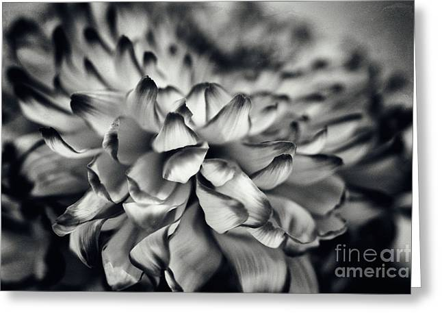 Flower Design Greeting Cards - monochrom flower BL Greeting Card by SK Pfphotography