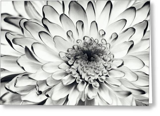 Grey Fine Art Greeting Cards - Monochrom flower CH Greeting Card by SK Pfphotography