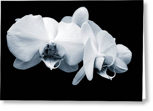 Apparel Greeting Cards - Monochromatic Orchid Phalaenopsis Greeting Card by Evelyn Odango
