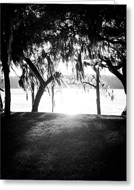 A Summer Evening Landscape Greeting Cards - Monochrome Spanish Moss Greeting Card by Shelby Young