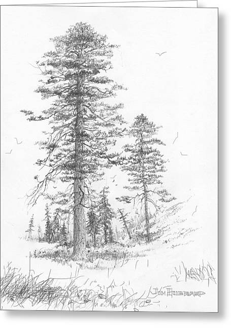 Jim Hubbard Greeting Cards - Montana-Ponderosa Pine Greeting Card by Jim Hubbard