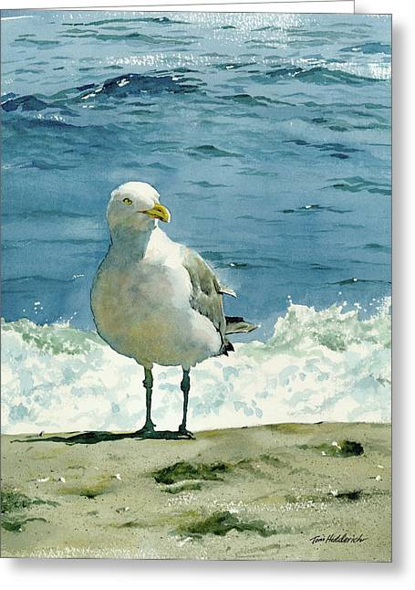 Ocean Shore Paintings Greeting Cards - Montauk Gull Greeting Card by Tom Hedderich