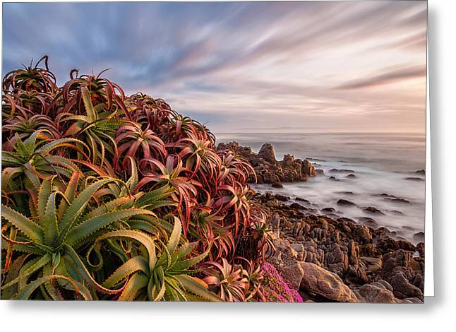 Big Sur Beach Greeting Cards - Monterey At Dawn Greeting Card by Jonathan Nguyen