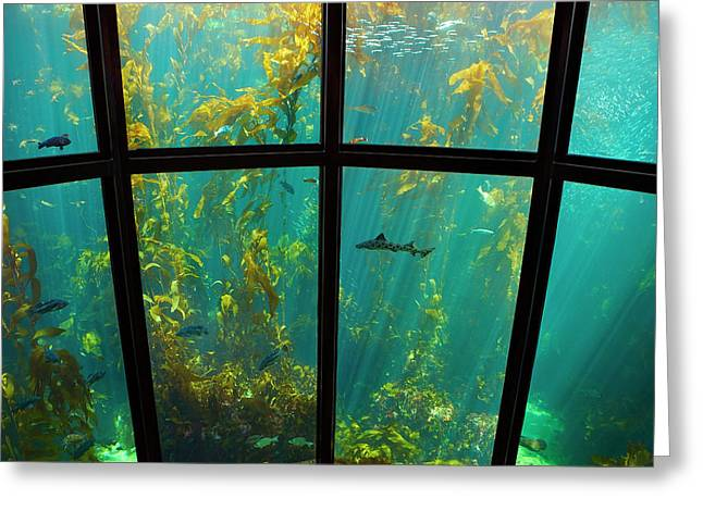 Leopard Shark Greeting Cards - Monterey Kelp Forest Greeting Card by Brian Knott - Forget Me Knott Photography