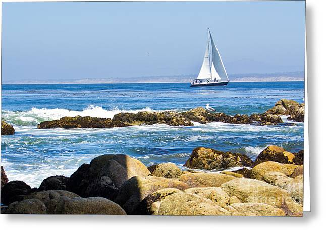 Sailboat Ocean Greeting Cards - Monterey Sailing Greeting Card by Ava Peterson