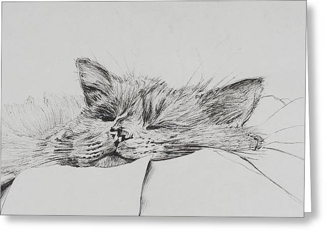 Cute Kitten Drawings Greeting Cards - Monty  sleepy boy Greeting Card by Vincent Alexander Booth