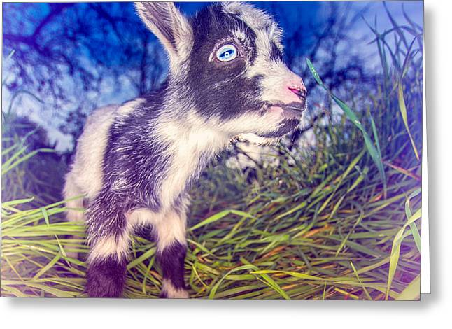 Moo Moo Greeting Cards - Moo Cow Love Grass Greeting Card by TC Morgan