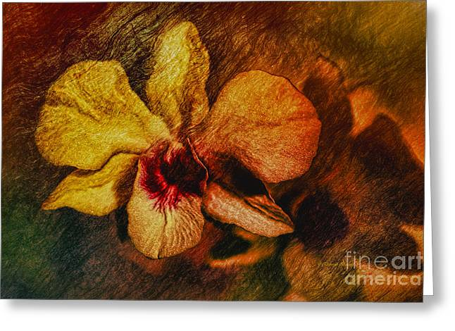 Mood Of The Orchid Greeting Card by Deborah Benoit