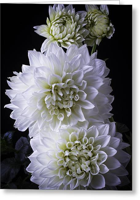 Large White Flower Close Up Greeting Cards - Moody Dahlias Greeting Card by Garry Gay