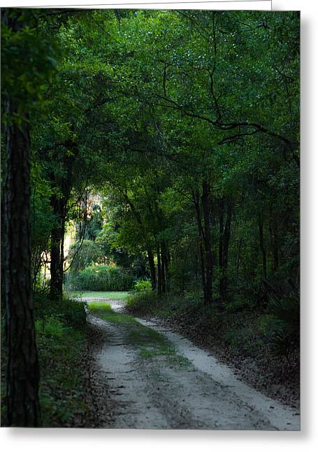 Jogging Greeting Cards - Moody Path Greeting Card by Shelby  Young