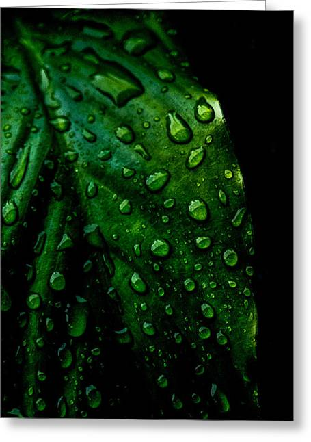 Rain Droplet Photographs Greeting Cards - Moody Raindrops Greeting Card by Parker Cunningham