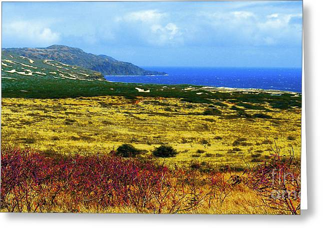 Moomomi Preserve Greeting Card by James Temple