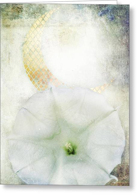 Pale Blue Greeting Cards - Moon Flower Greeting Card by Aimee Stewart