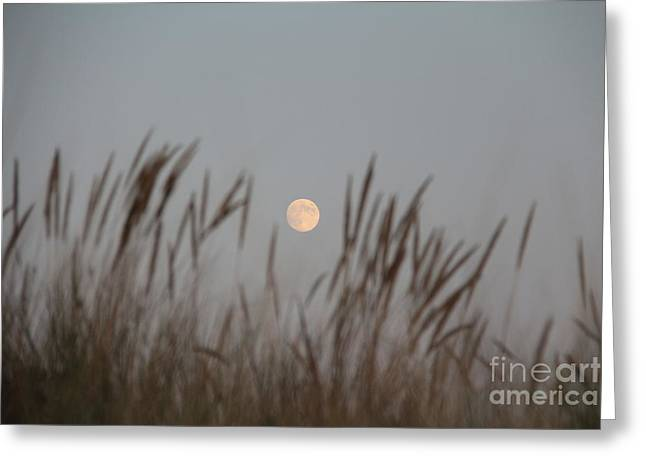 Sea Moon Full Moon Greeting Cards - Moon Rise Greeting Card by Tiare Pitzer