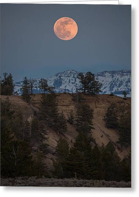 Moon Rising // Tower Junction, Yellowstone National Park Greeting Card by Nicholas Parker