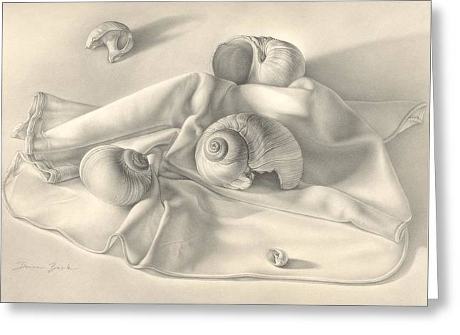 Moon Beach Drawings Greeting Cards - Moon Snail Still Life Greeting Card by Donna Basile